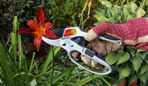 using ergonomic pruners with gloves