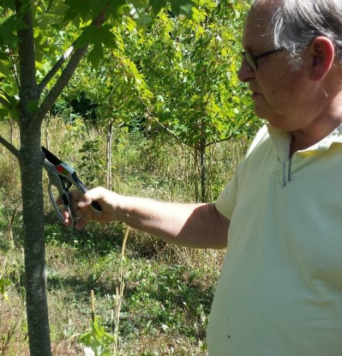 picture of a man using ergonomic pruners
